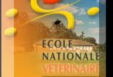 Congreso de la Sociedad Francesa de Oftalmología Veterinaria