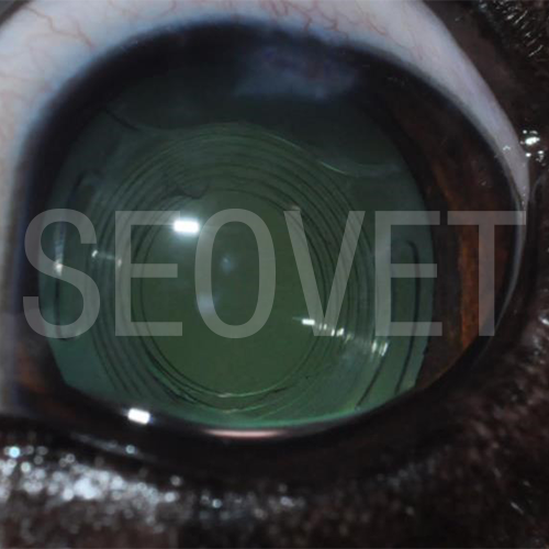 La catarata  definición y tratamiento   Seovet 012ff3f30d
