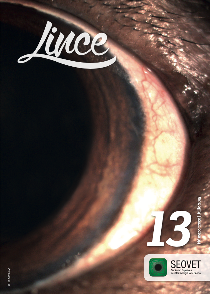 Lince 13