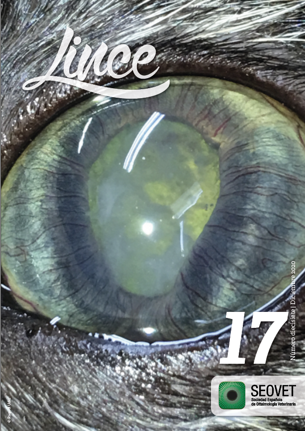 Lince 17